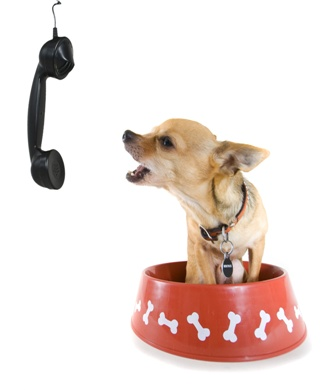 Contact Have A Good Dog
